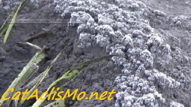 aliran monsun dingin merupakan fenomena alami